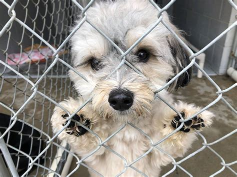Local humane society helps displaced animals in northern